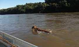 Coxim - On�a Parda atravessando o Rio Taquari em Coxim-MS-Foto:soninha britez