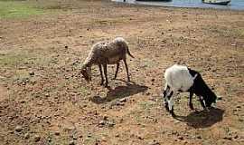 Bem-Bom - Bem Bom-BA-Cabras na beira do rio-Foto:Gildesio Barbosa