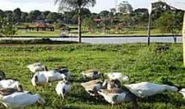 Dourados - Patos no Lago Parque Antenor Martins-Foto:Paulo Yuji Takarada [Panoramio]