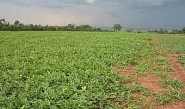 Eldorado - Eldorado-MS-Plantação de melancia-Foto:geraldoresende.