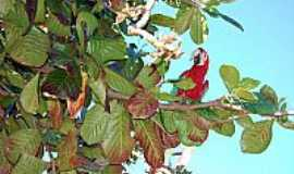 Guia Lopes da Laguna - � comum na cidade ver bando de araras este � um ponto dela se alimentarem