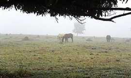 Inocência - Inocência-MS-Neblina na pastagem-Foto:José Eustáquio Ribeiro