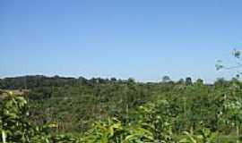 Jateí - Vegetação nativa no Sítio Escola em Jateí-Foto:Antonio B. de Souza