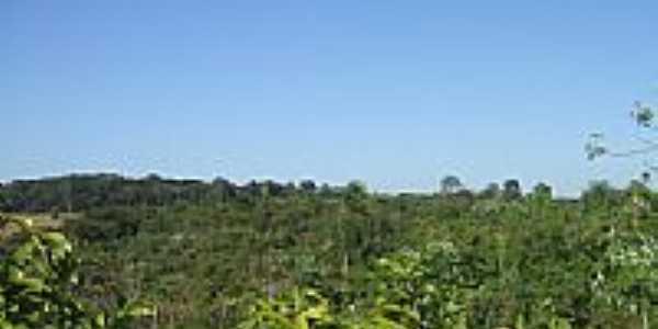 Vegetação nativa no Sítio Escola em Jateí-Foto:Antonio B. de Souza