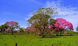 Ladário - Flora do Pantanal-Foto:Meire Ruiz [Panoramio]