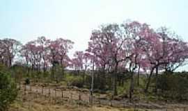 Miranda - Ypês floridos próximo à cidade de Miranda-Foto:Juvenal Coelho Ribei…