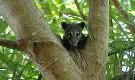 Nhecolândia - Nhecolândia-MS-Fauna do Parque-Foto:destinodeviagem