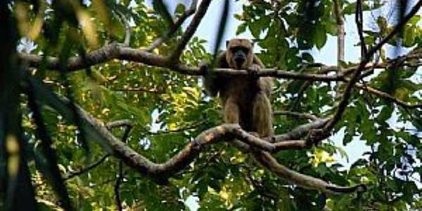 Nhecolândia-MS-Fauna do Parque-Foto:destinodeviagem