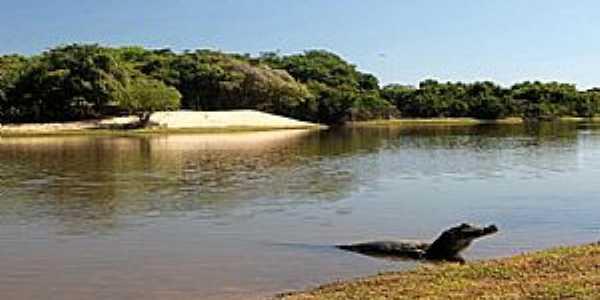 Nhecolândia-MS-Pantanal de Nhecolândia-Foto:NEWS DE RV