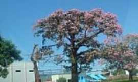 Nova Andradina - Praça