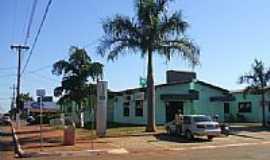 Novo Horizonte do Sul - Palmeira Real no centro de Novo Horizonte do Sul-Foto:Antonio B. de Souza