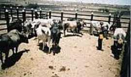 Boa União - Vaqueiro - Boa União-Foto:culturicidade.