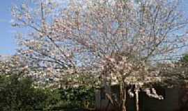 Picadinha - Árvore florida-Foto:Paulo Yuji Takarada