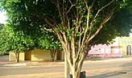 Sonora - Bela árvore na Rua dos Mecânicos em Sonora-MS-Foto:ivaldo silva
