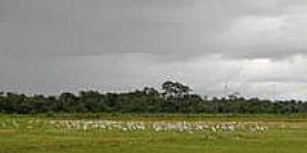 Plantação de Arroz-Foto:Rivaldi