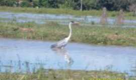 Barão de Melgaço - pantanal b.m, Por rodrigo closs