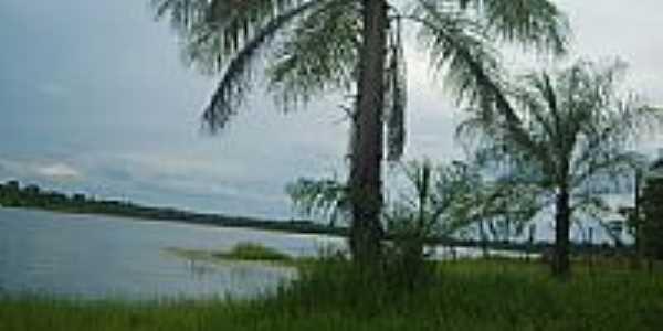 Palmeira margem represa por Alaor Gomes
