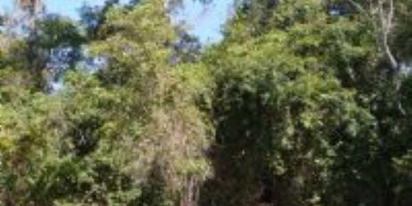 Canarana - MT - Arvores Centenarias, Por sergio