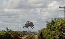 Cláudia - Avenida-Foto:Manduquinha