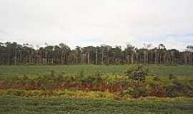 Comodoro - Bosque