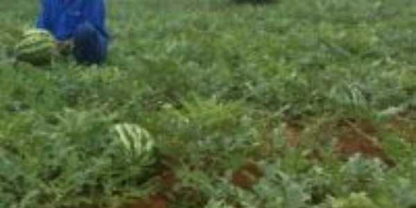 Planta�ao de Melancia(confresa2009), Por Valdson Tome