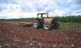 Denise - Agricultura