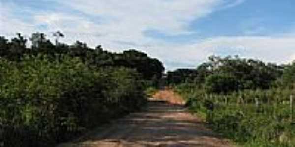 Estrada Gaúcha do Norte-Foto:cafeicultura