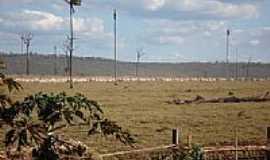 Guarant� do Norte - Guarant� do Norte-MT-�rea de pastagem-Foto:Jo�o Henrique Rosa