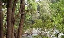 Matup� - Mata e ao fundo o rio em Matup�-Foto:Renato Fernandes de �