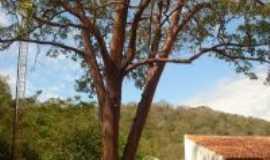 Mimoso - pau brasil na escola santa claudina, Por duda