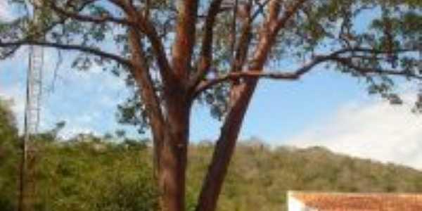 pau brasil na escola santa claudina, Por duda