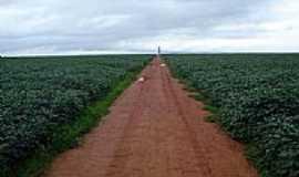 Nova Ubiratã - Fazenda de soja-Foto:irenemurai