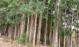Nova Ubiratã - Seringal Reserva Ronuro, Por CLEONICE GOMES DA SILVA MAYNART