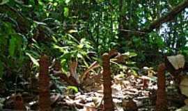 Paranaíta - Paranaíta-MT-Escultura de inseto-Sítio Arqueológico-Foto:dalcio e marilda beregula