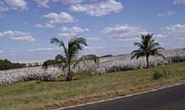 Pedra Preta - Plantação de algodão por Cássio Fernandes