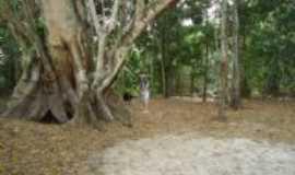 Porto dos Gaúchos - Árvore dentro da ilha, Por Giovana Frare
