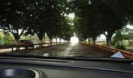 Progresso - Árvores-Distrito de Progresso-Foto:zedahora1@hotmail.co…