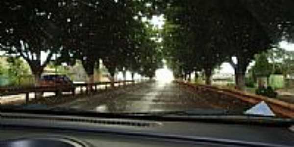 Árvores-Distrito de Progresso-Foto:zedahora1@hotmail.co…