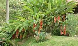Reserva do Caba�al - Helic�nias em Reserva do Caba�al MT por honorato.snowareski