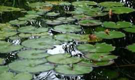 Buritirama - Buritirama-BA-Plantas aquáticas-Foto:beto viana