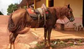 Vale Rico - Aqui Ainda Anda-se a Cavalo, Por gustavo amaral