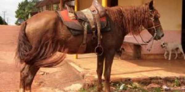 Aqui Ainda Anda-se a Cavalo, Por gustavo amaral