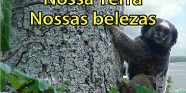 Cabaceiras do Paraguaçu-BA-Fauna na região-Foto:Anderson Bella