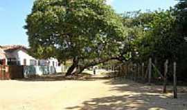 Algodoal - Rua de Algodoal-Foto:niani