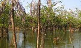 Alter do Chão - Igapó no Lago Verde-Foto:niani