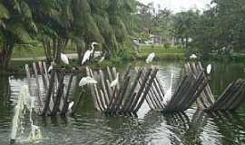 Belém - Mangal, por poliana