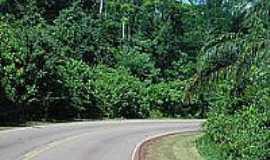 Caraj�s - Floresta Nacional dos Caraj�s