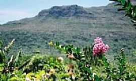 Caeté-Açu - Flor na rua principal de Caeté-Açú com a Serra da Larguinha ao fundo por Duda Borges