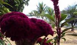 Curu�� - Curu��-PA-Flores na orla-Foto:PEDRO PAULO