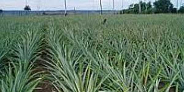 Plantação de abacaxi em Floresta do Araguaia-Foto:nortemixado